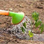 ミニトマトの育て方!肥料の選び方や追肥の時期について
