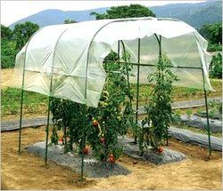トマト栽培 雨よけ