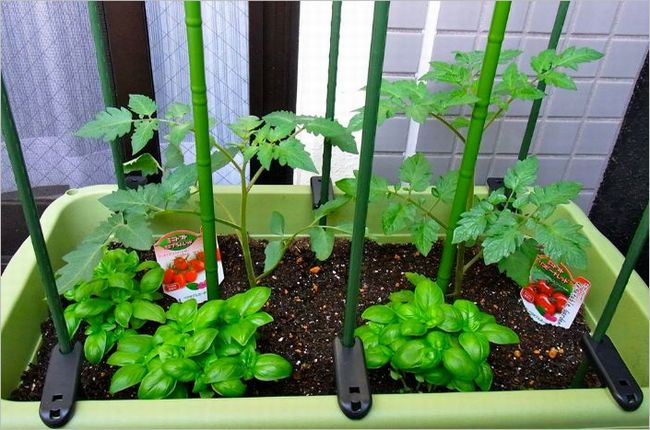 トマト栽培 植え方