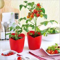 プチトマト栽培 やり方