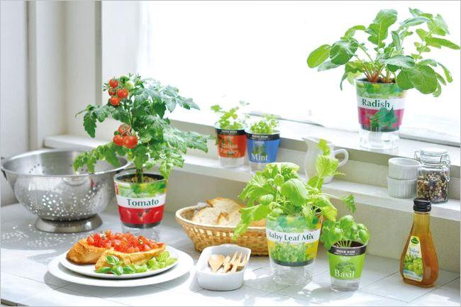 野菜の栽培キット
