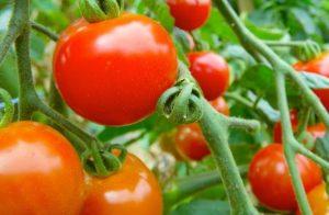 トマト 色